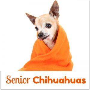 Senior Chihuahuas