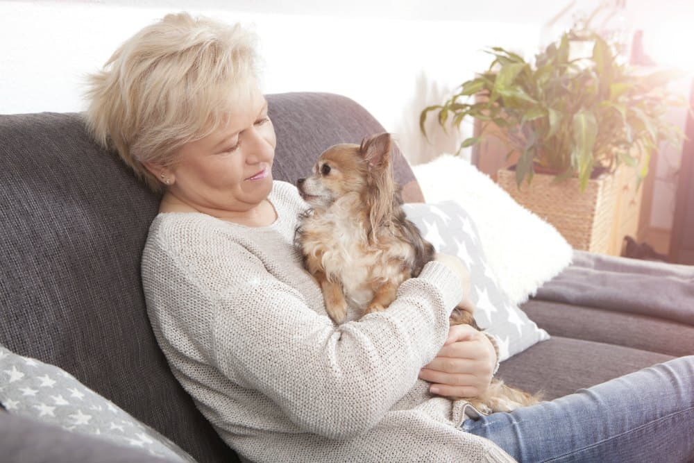 older lady woman holding chihuahua