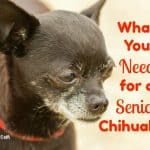 supplies for senior chihuahua