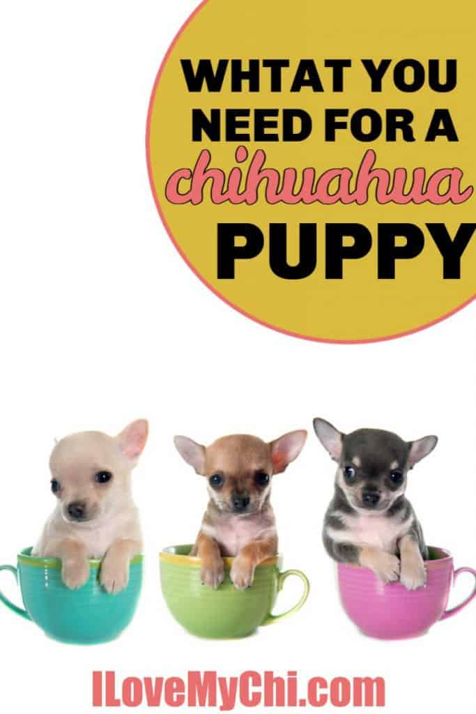3 chihuahua puppies in teacups