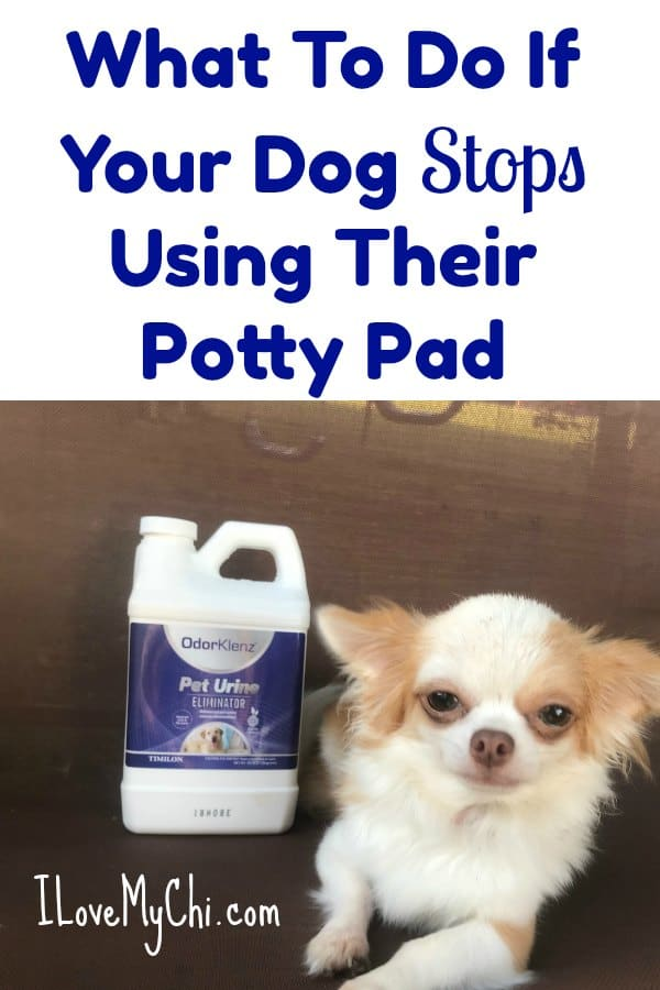 What To Do If Your Dog Stops Using Their Potty Pad p