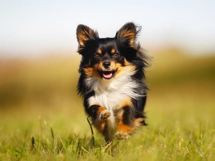 chi running in grass
