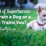 A Duet of Superheroes: You Train a Dog or a Dog Trains You?