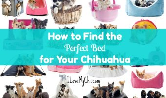 How to Find the Perfect Bed for Your Chihuahua