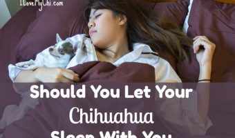 woman sleeping in bed with chihuahua