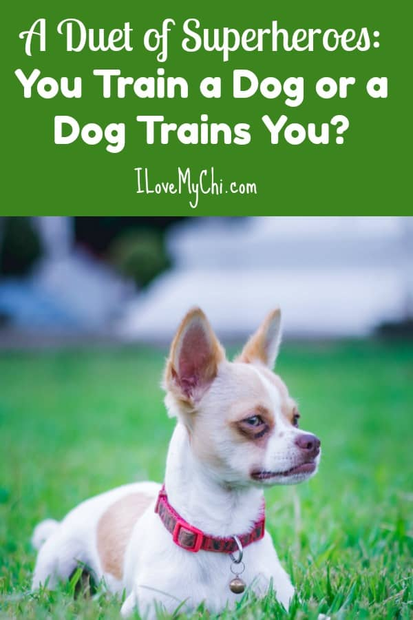 You can have a well trained dog and also have a great relationship with your dog too.