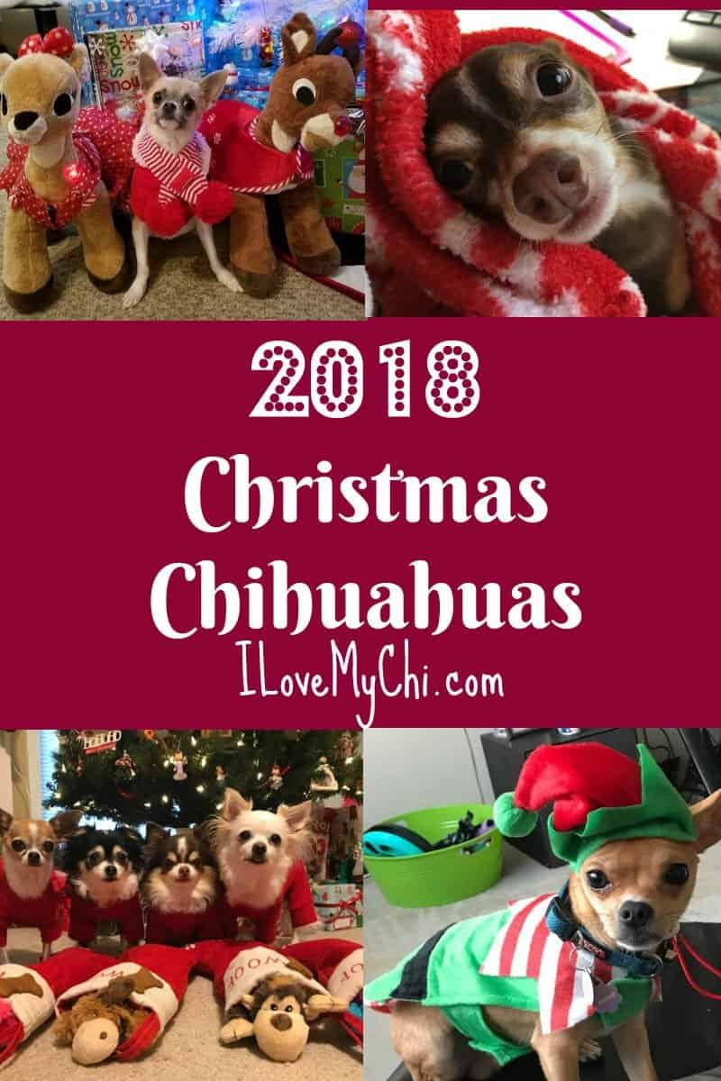 2018 Christmas Chihuahuas