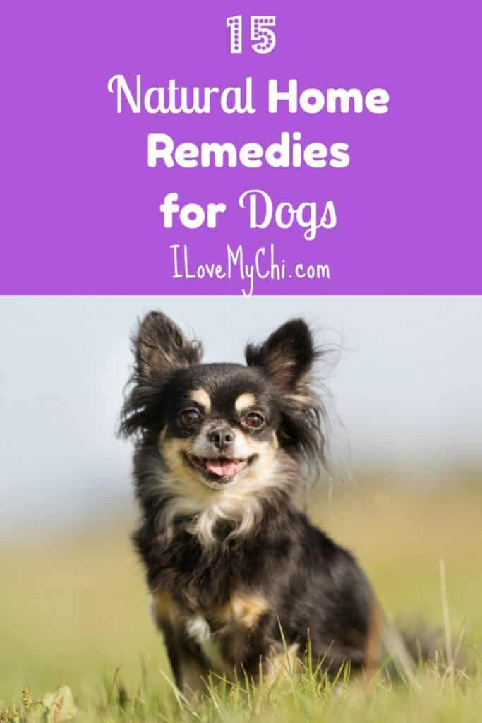 15 Natural Home Remedies for Dogs