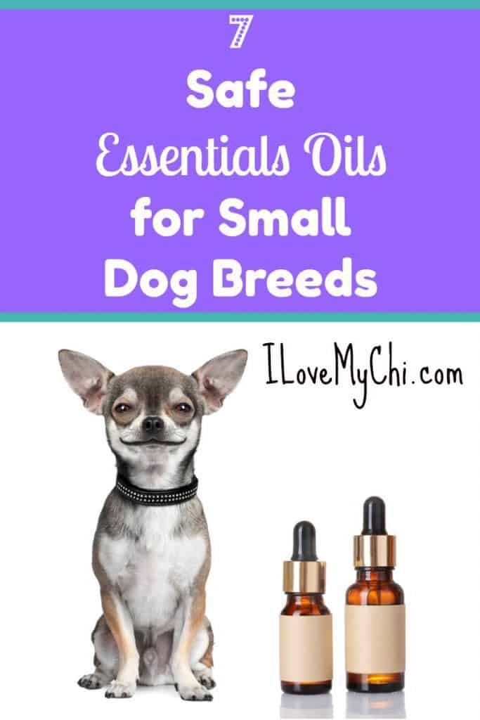 7 Safe Essentials Oils for Small Dog Breeds