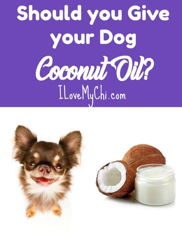 Should you Give your Dog Coconut Oil