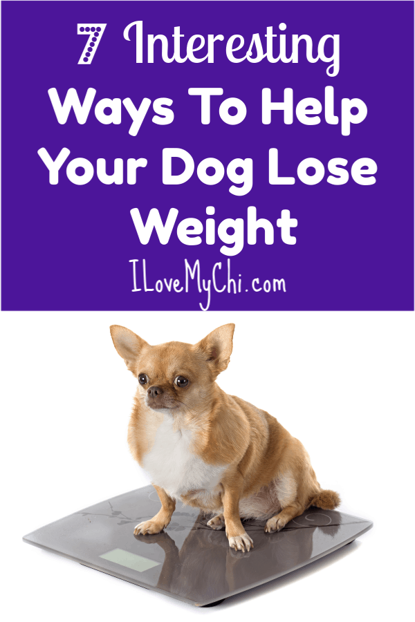 7 Interesting Ways To Help Your Dog Lose Weight