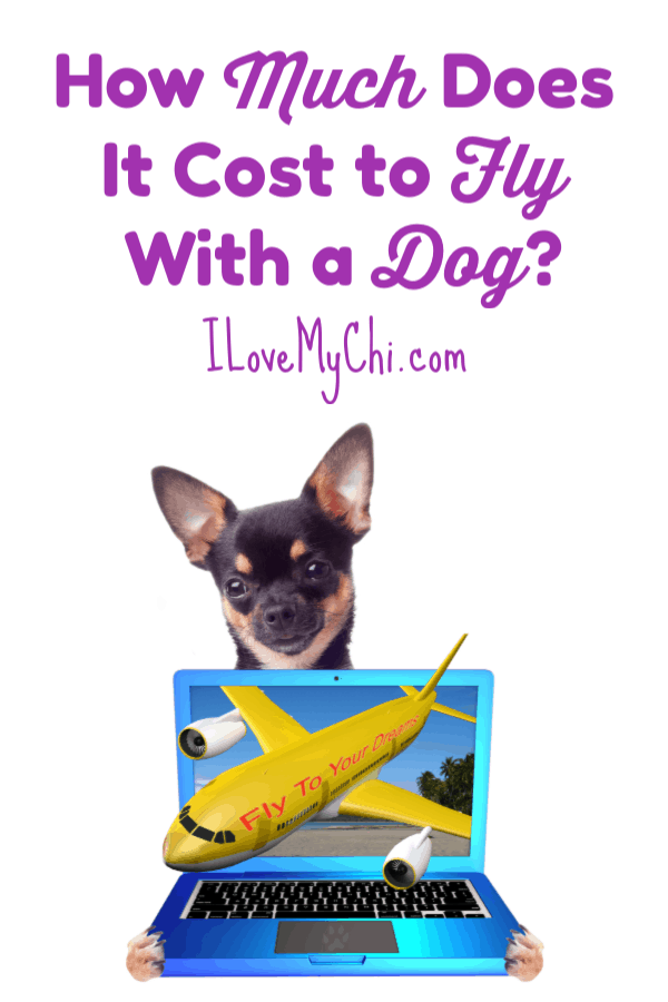 How Much Does It Cost to Fly With a Dog?