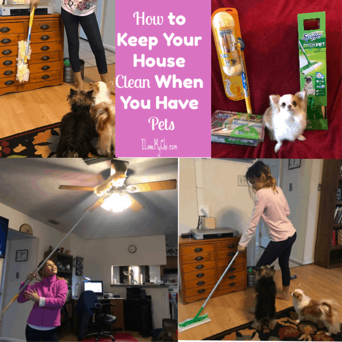 How To Keep Your House Clean When You Have Pets I Love My Chi