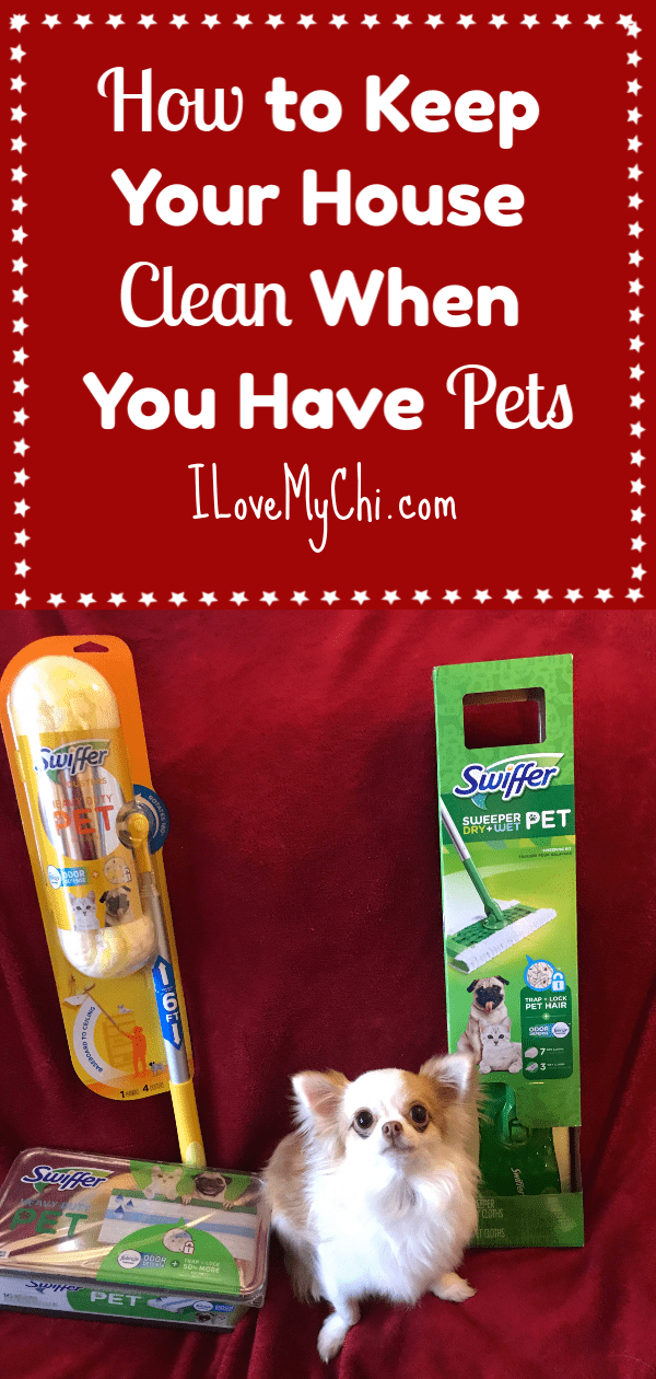 long haired chihuahua sitting with Swiffer's new pet products