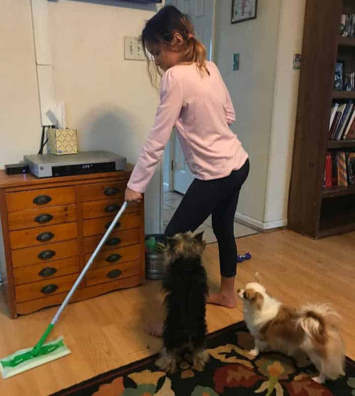 girl mopping with Swiffer mop while 2 dogs watching