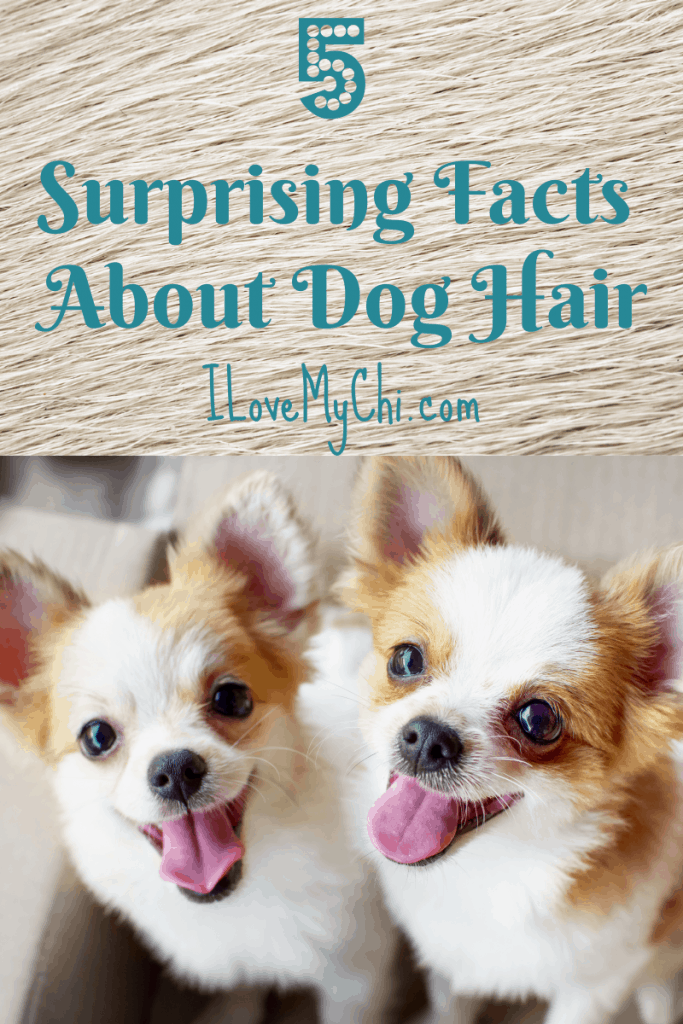 5 Surprising Facts About Dog Hair