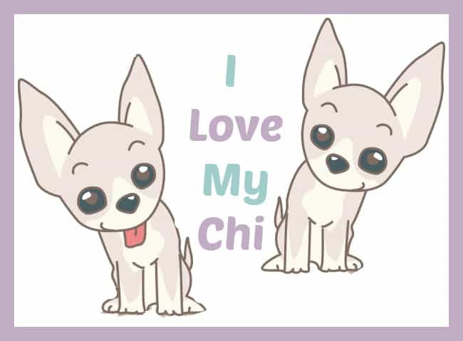 II Love My Chi -All about Chihuahu Dogsa