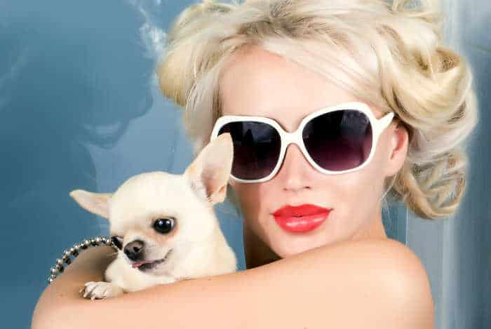 blond woman in sunglasses holding chihuahua