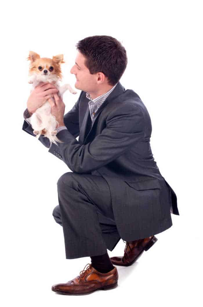business man holding chihuahua