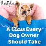 A Class Every Dog Owner Should Take
