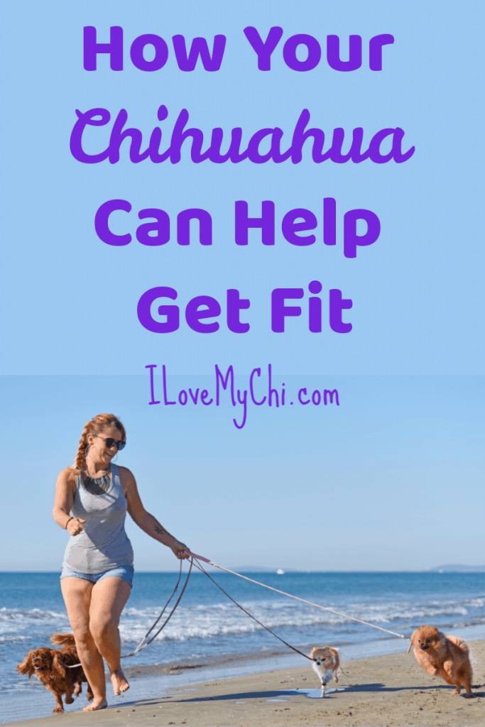 How Your Chihuahua Can Help You Get Fit