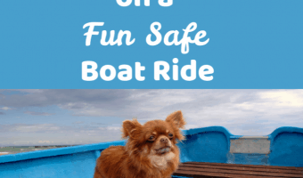 chihuahua in red boat