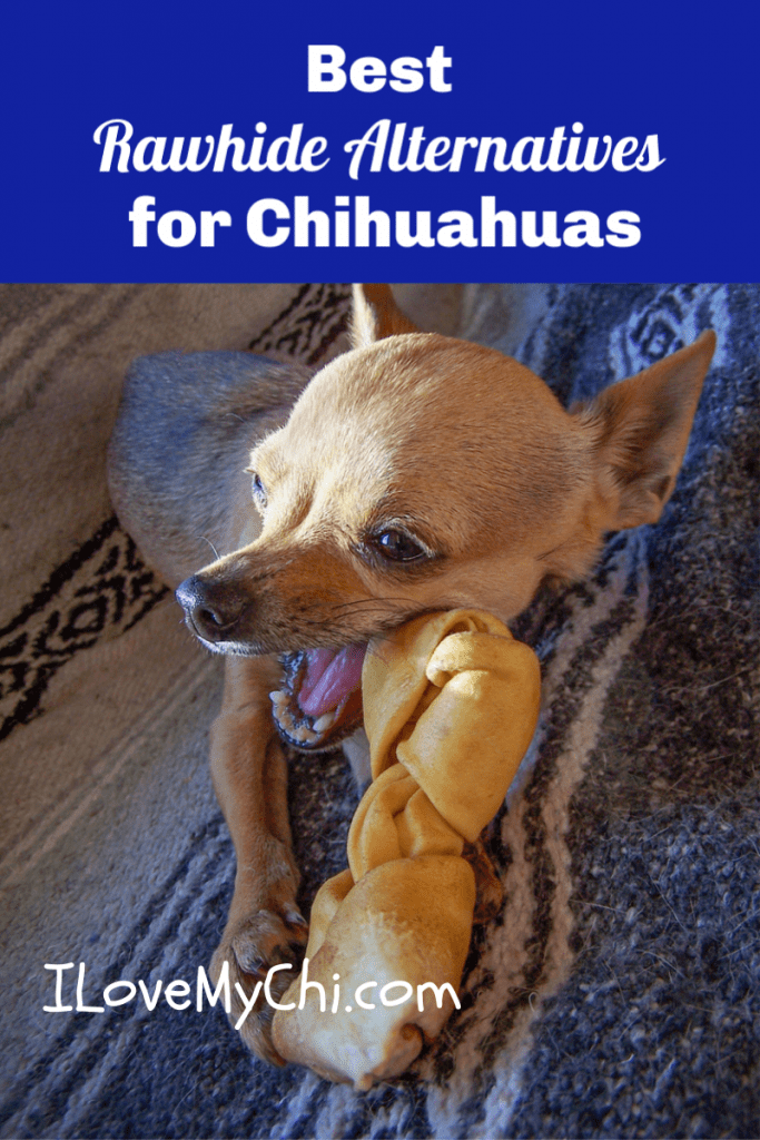Best Rawhide Alternatives for Chihuahuas (and Other Dogs Too!)