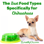 The Best Food Types Specifically for Chihuahuas