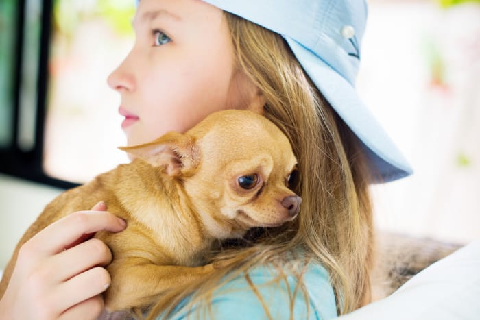 girl holding a sick chihuahua