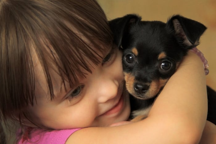 a small girl hugging a chihuahua puppy