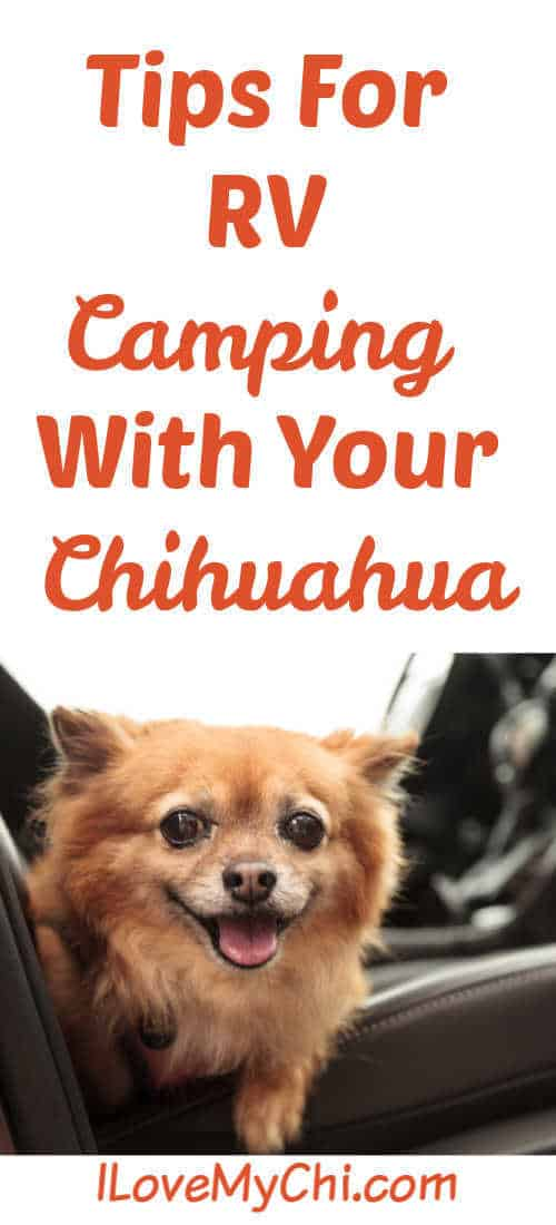 chihuahua on a car seat in a RV