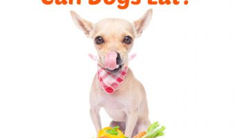 chihuahua in front of dog bowl full of vegetables