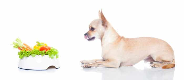 chihuahua dog with food bowl with vegetables in it