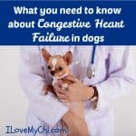 What you need to know about Congestive Heart Failure in dogs