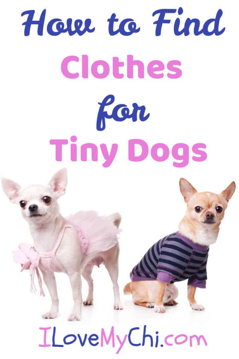 2 tiny dogs wearing clothes