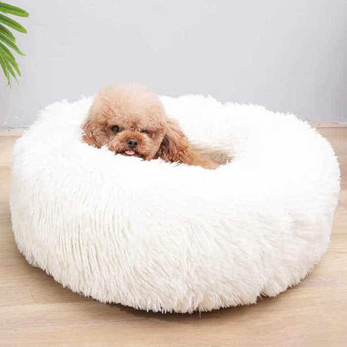 dog in fluffy dog bed