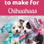 2 smal chihuahua puppies wearing knitted scarfs and hats