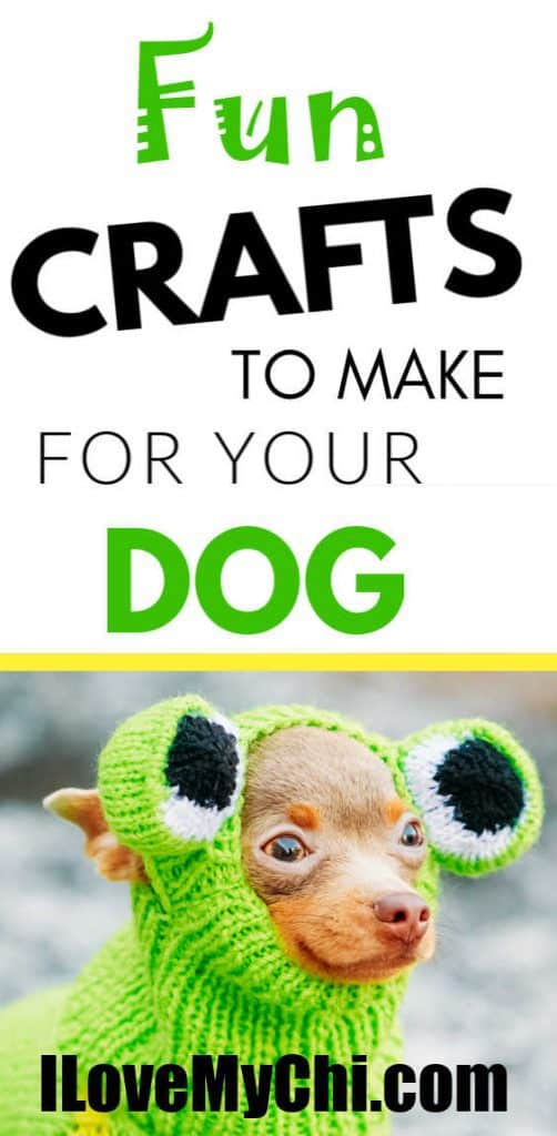 chihuahua in hand knitted frog costume