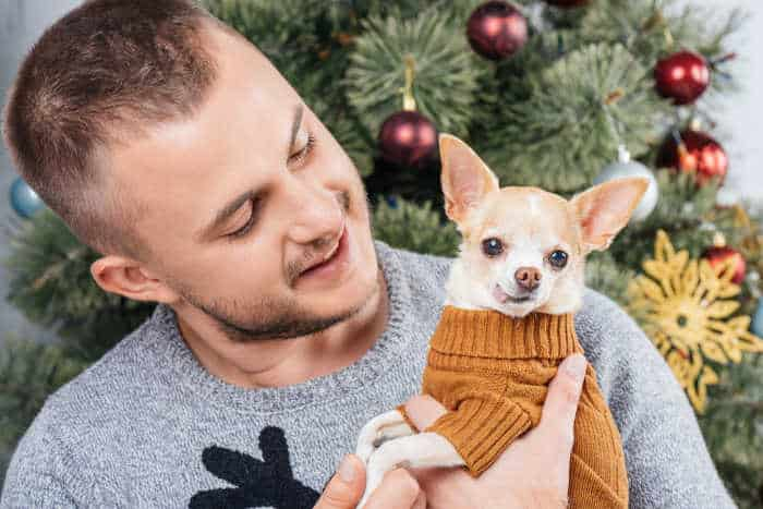 man holding chihuahua with Christmas tree