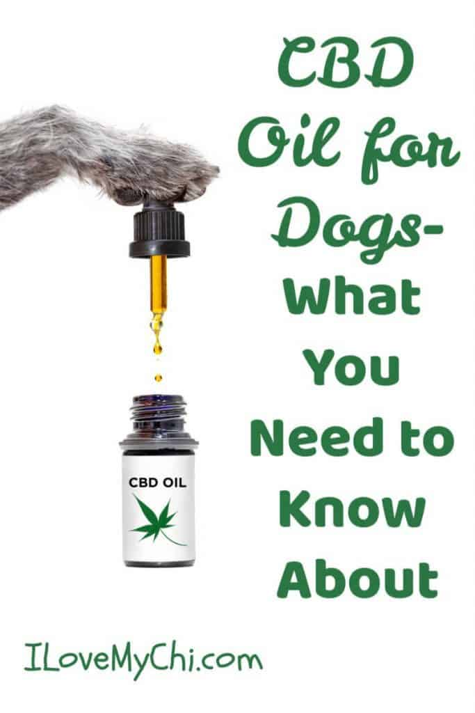 dog paw with dropper and CBD oil
