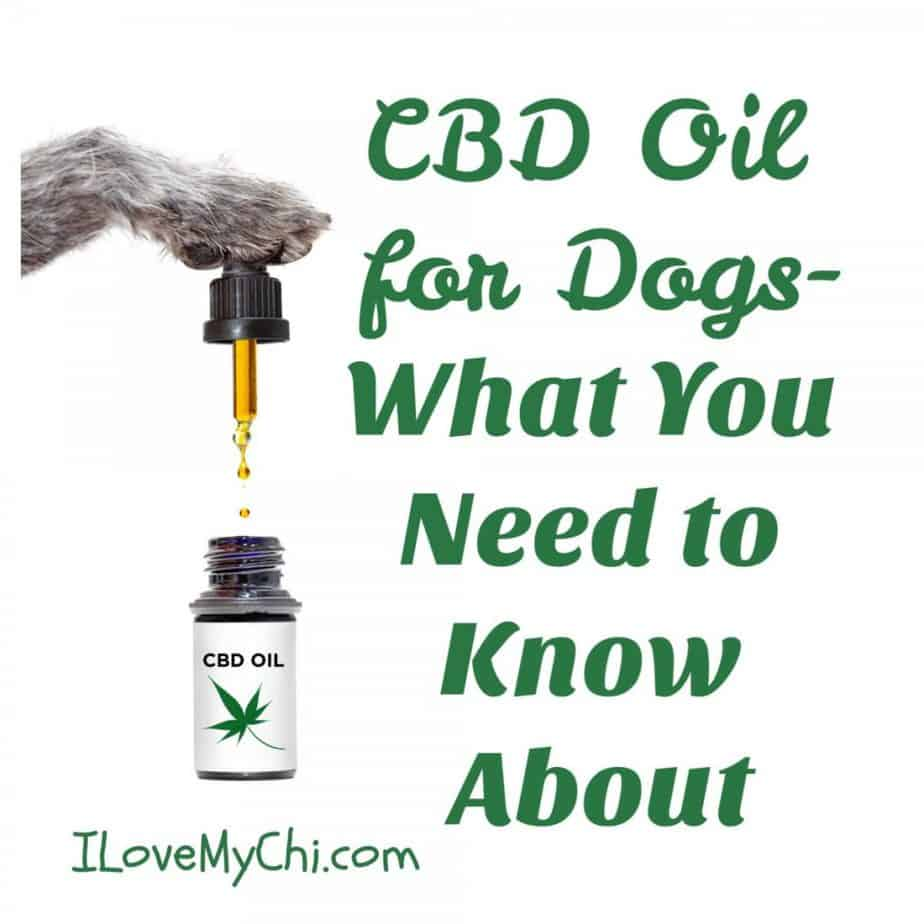 dog paw with CBD oil