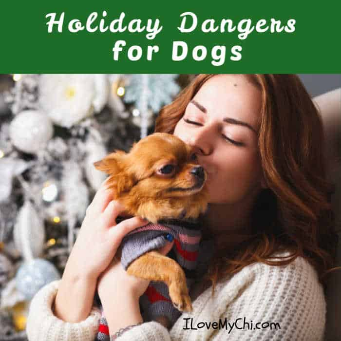woman kissing a chihuahua dog by the Christmas tree
