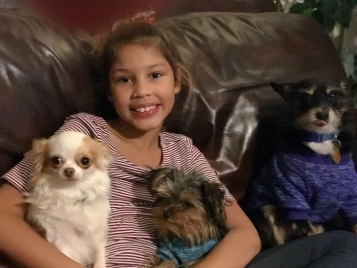 little girl with 3 small dogs