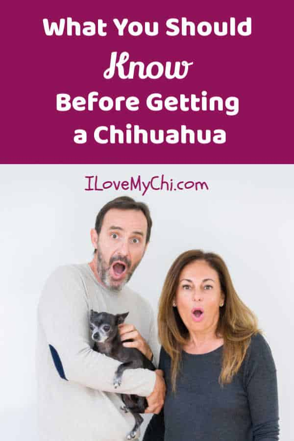 surprised man and woman holding a chihuahua dog