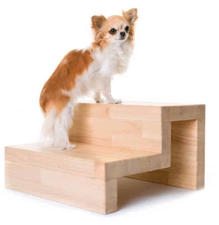 chihuahua on wooden steps