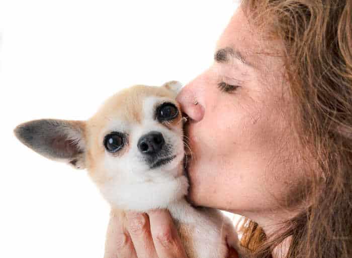 woman kissing a chihuahua dog