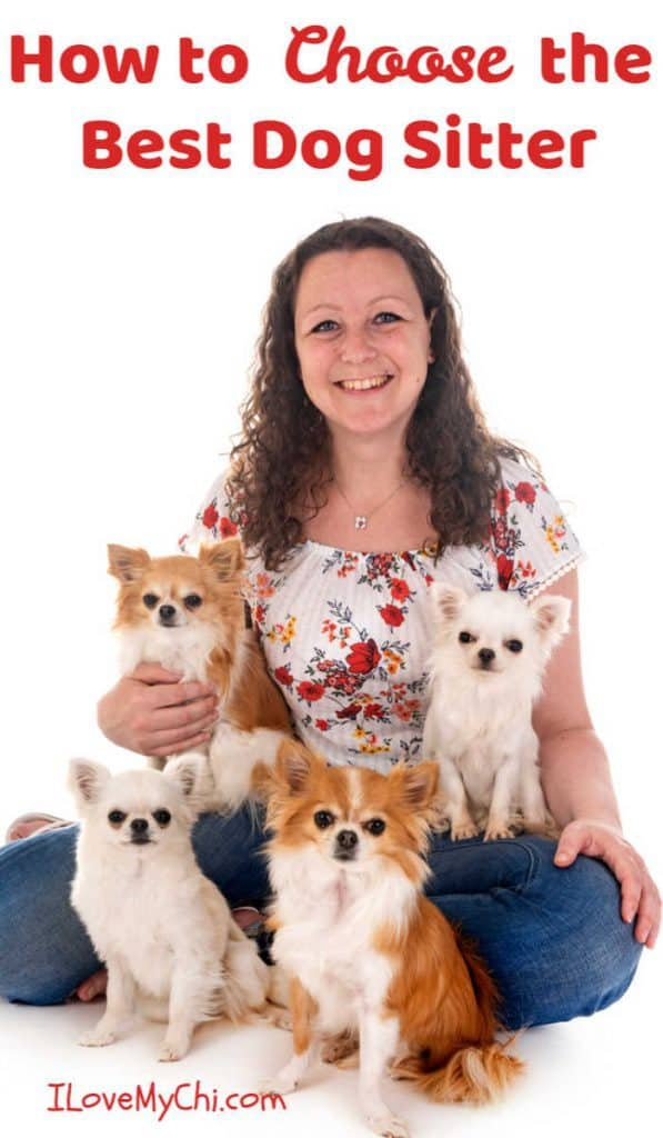 woman sitting with 4 chihuahuas