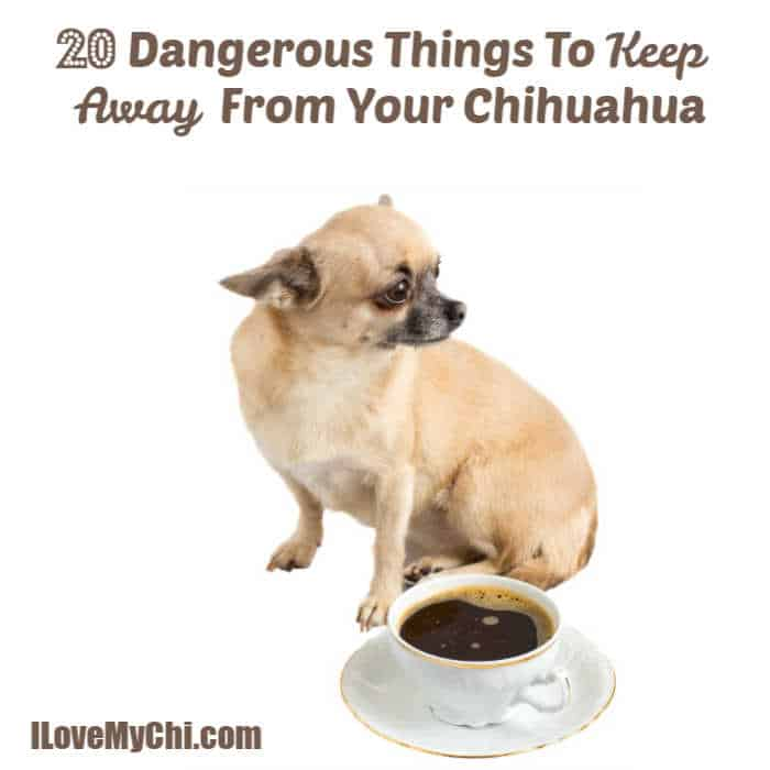 fawn chihuahua dog sitting next to cup of coffee