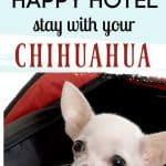 white chihuahua in travel bag