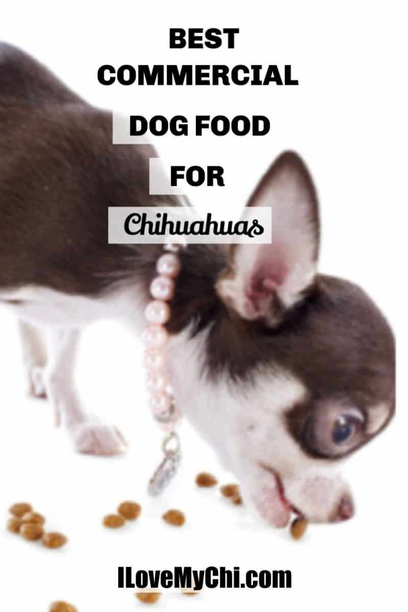 Brown and white chihuahua eating kibble dog food